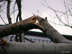 "Broken Branch Image - ""California's Broken Branch"" Statewide Judicial Protest"